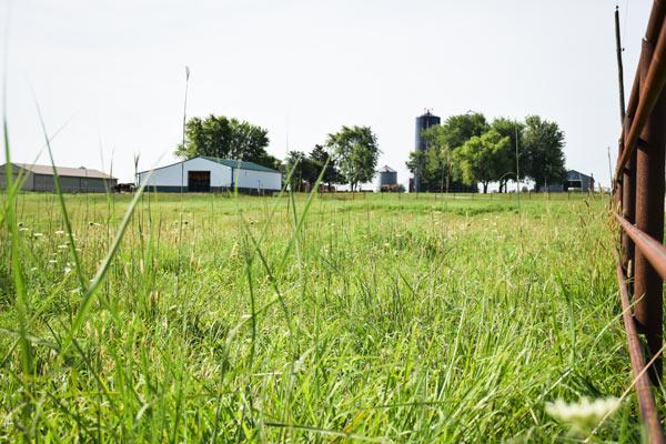 Pasture around Elder Haven